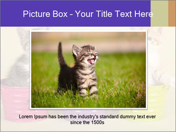 Moggie kittens PowerPoint Template - Slide 15