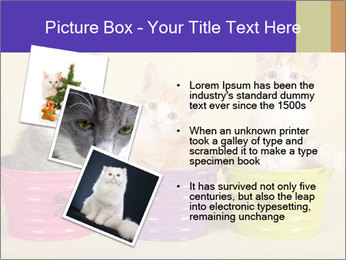 Moggie kittens PowerPoint Template - Slide 17