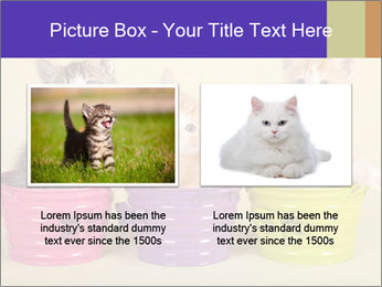 Moggie kittens PowerPoint Template - Slide 18