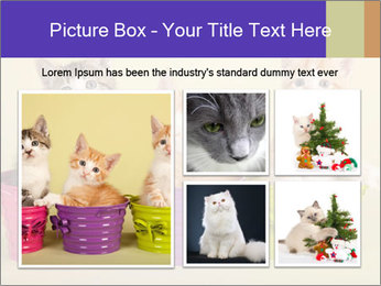 Moggie kittens PowerPoint Template - Slide 19