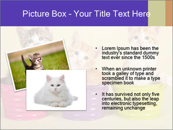 Moggie kittens PowerPoint Template - Slide 20