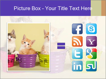 Moggie kittens PowerPoint Template - Slide 21