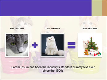 Moggie kittens PowerPoint Template - Slide 22