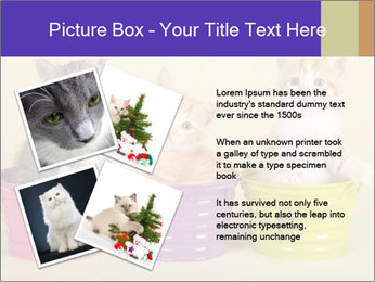Moggie kittens PowerPoint Template - Slide 23