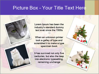 Moggie kittens PowerPoint Template - Slide 24