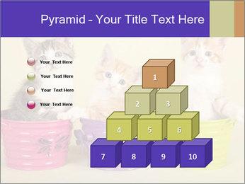 Moggie kittens PowerPoint Template - Slide 31