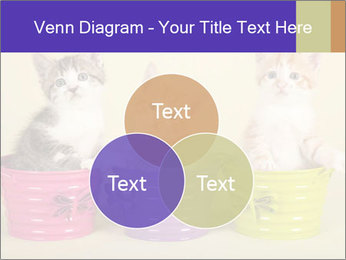 Moggie kittens PowerPoint Template - Slide 33
