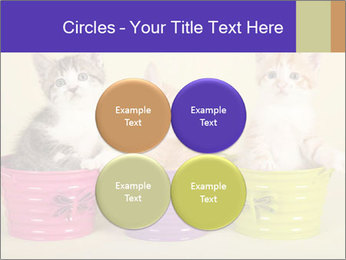Moggie kittens PowerPoint Template - Slide 38