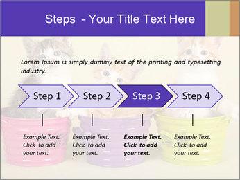 Moggie kittens PowerPoint Template - Slide 4