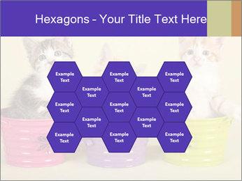 Moggie kittens PowerPoint Template - Slide 44