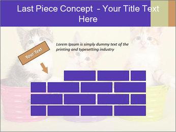 Moggie kittens PowerPoint Template - Slide 46