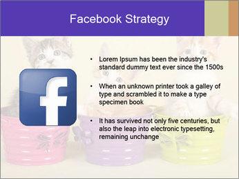 Moggie kittens PowerPoint Template - Slide 6