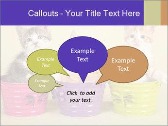 Moggie kittens PowerPoint Template - Slide 73