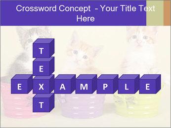 Moggie kittens PowerPoint Template - Slide 82
