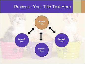 Moggie kittens PowerPoint Template - Slide 91
