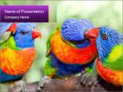 Australian rainbow PowerPoint Templates
