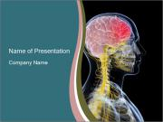 X-ray of the  brain PowerPoint Templates