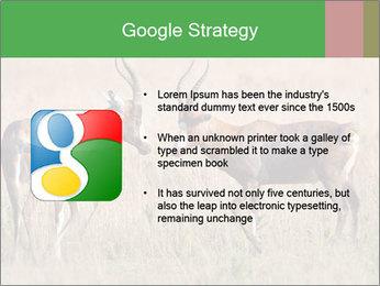 Pair of Blesbok PowerPoint Templates - Slide 10
