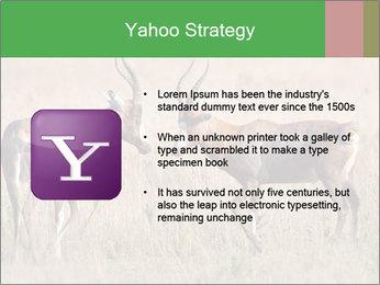 Pair of Blesbok PowerPoint Templates - Slide 11