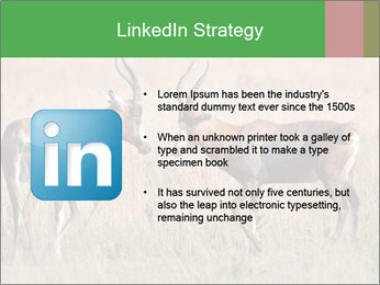 Pair of Blesbok PowerPoint Templates - Slide 12