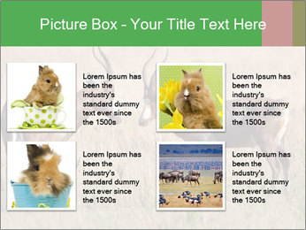 Pair of Blesbok PowerPoint Template - Slide 14