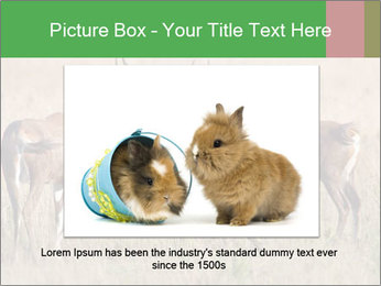 Pair of Blesbok PowerPoint Template - Slide 15