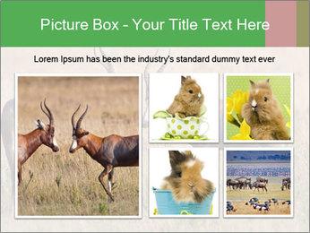 Pair of Blesbok PowerPoint Templates - Slide 19