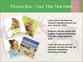 Pair of Blesbok PowerPoint Templates - Slide 23