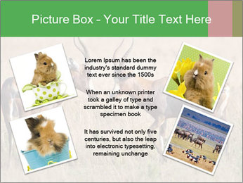 Pair of Blesbok PowerPoint Templates - Slide 24