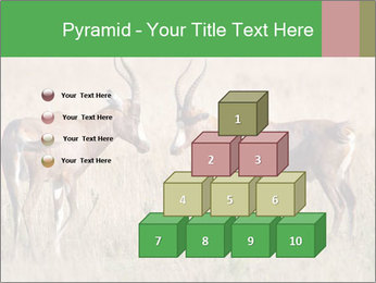 Pair of Blesbok PowerPoint Template - Slide 31