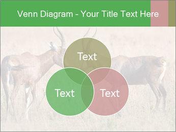 Pair of Blesbok PowerPoint Templates - Slide 33