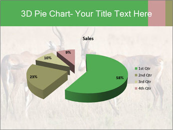 Pair of Blesbok PowerPoint Template - Slide 35
