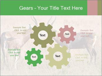 Pair of Blesbok PowerPoint Templates - Slide 47