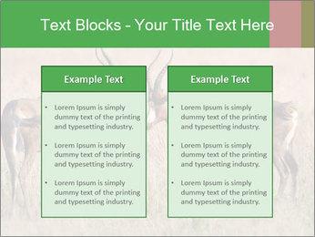 Pair of Blesbok PowerPoint Templates - Slide 57