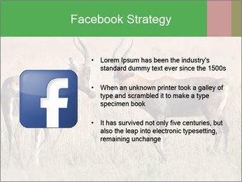Pair of Blesbok PowerPoint Templates - Slide 6