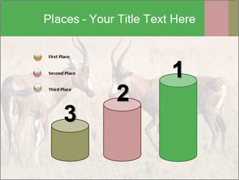 Pair of Blesbok PowerPoint Templates - Slide 65