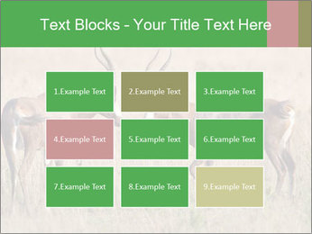 Pair of Blesbok PowerPoint Template - Slide 68