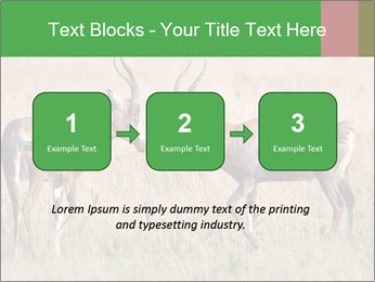 Pair of Blesbok PowerPoint Template - Slide 71