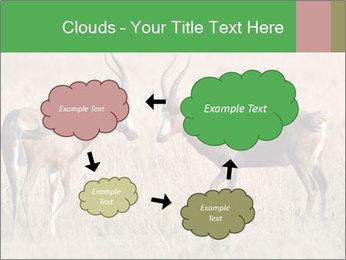 Pair of Blesbok PowerPoint Templates - Slide 72