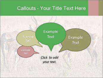 Pair of Blesbok PowerPoint Templates - Slide 73