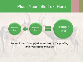 Pair of Blesbok PowerPoint Template - Slide 75