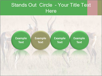 Pair of Blesbok PowerPoint Templates - Slide 76