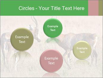 Pair of Blesbok PowerPoint Templates - Slide 77