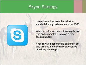Pair of Blesbok PowerPoint Template - Slide 8