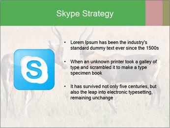 Pair of Blesbok PowerPoint Templates - Slide 8