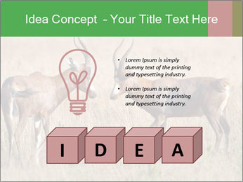 Pair of Blesbok PowerPoint Template - Slide 80