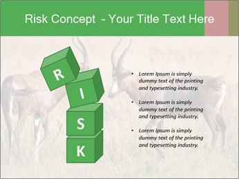 Pair of Blesbok PowerPoint Templates - Slide 81