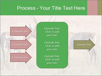 Pair of Blesbok PowerPoint Templates - Slide 85