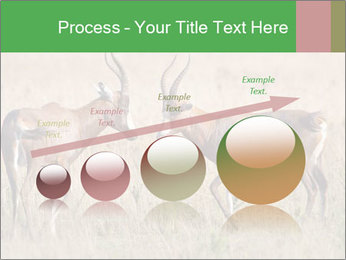 Pair of Blesbok PowerPoint Template - Slide 87