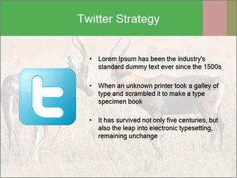Pair of Blesbok PowerPoint Templates - Slide 9